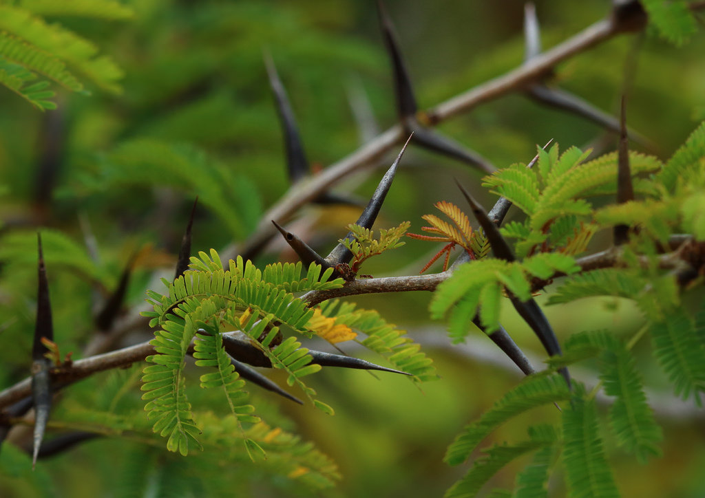 4 Of The Strangest Ways Plants Protect Themselves From Predators The Science Explorer