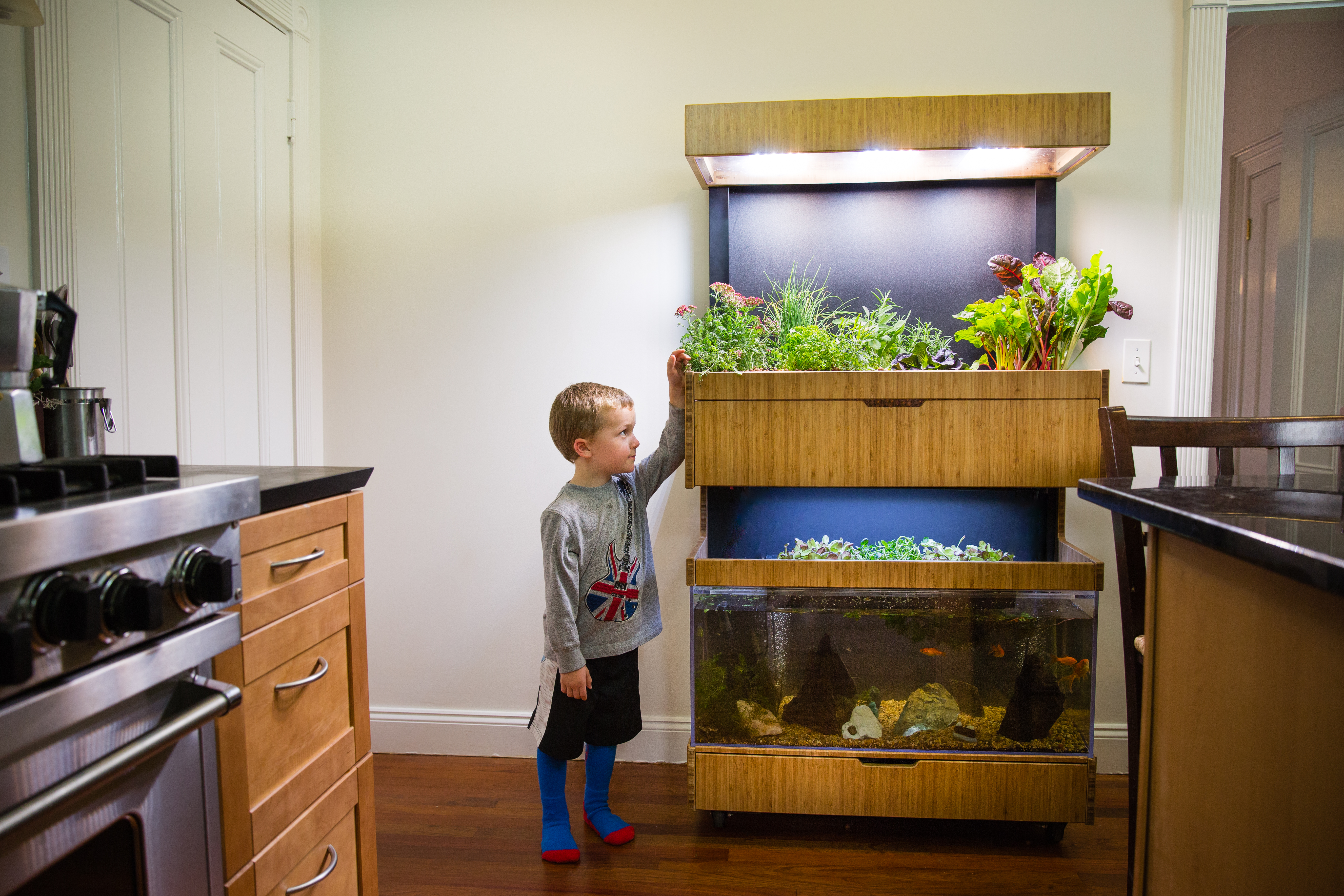 This Futuristic U201cGardenu201d Turns Your Kitchen Into A Mini Ecosystem | The  Science Explorer