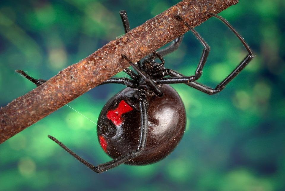 how to get spider dna