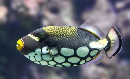 Reef fish see colors humans can only dream of the for What do fish see