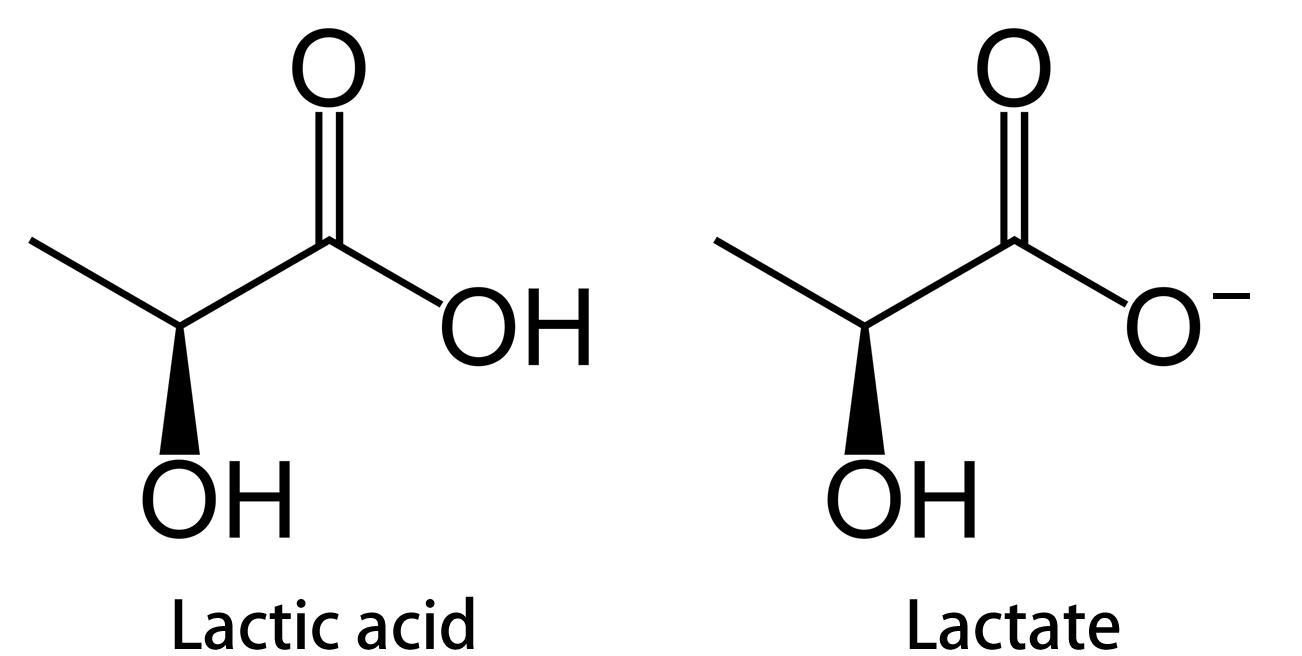 Molecular structure of lactic acid versus lactate