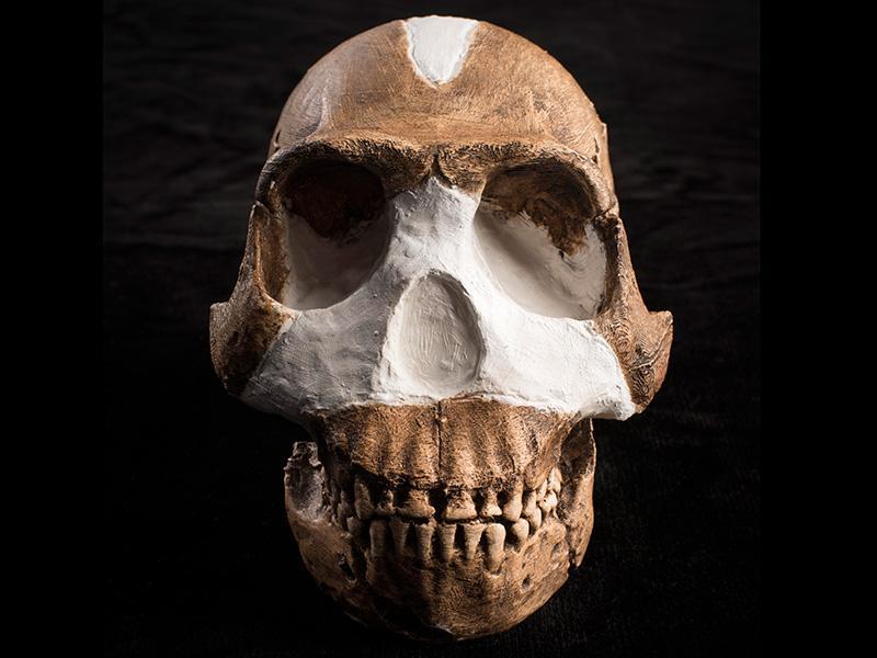 Homo naledi, a hominin species