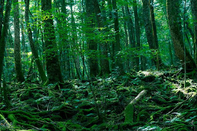 Aokigahara Forest, the Suicide Forest
