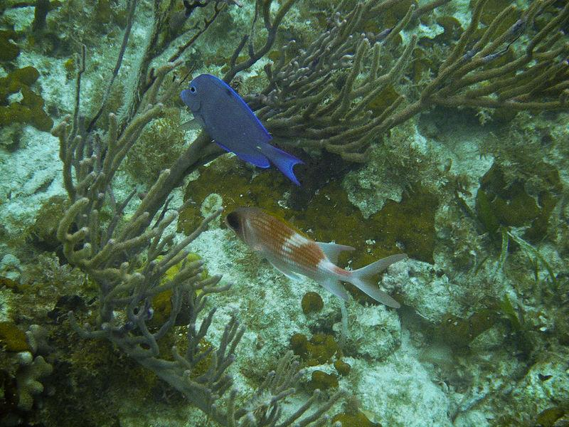 Fish off coast of Turks and Caicos