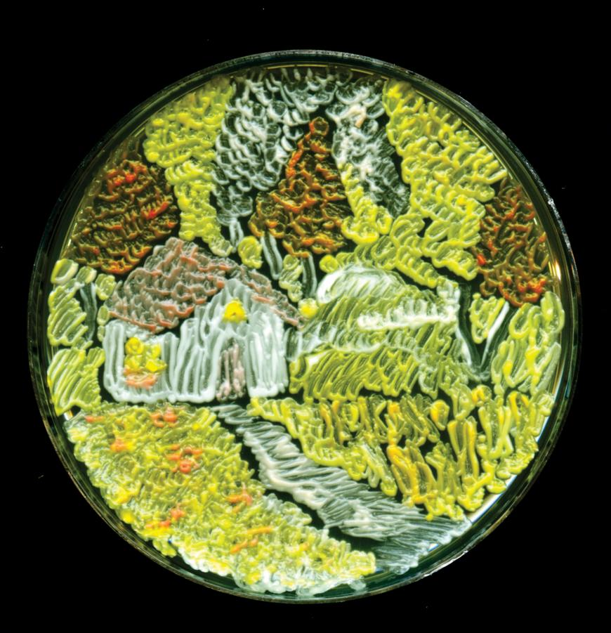 a farm painted on Agar. Agar art