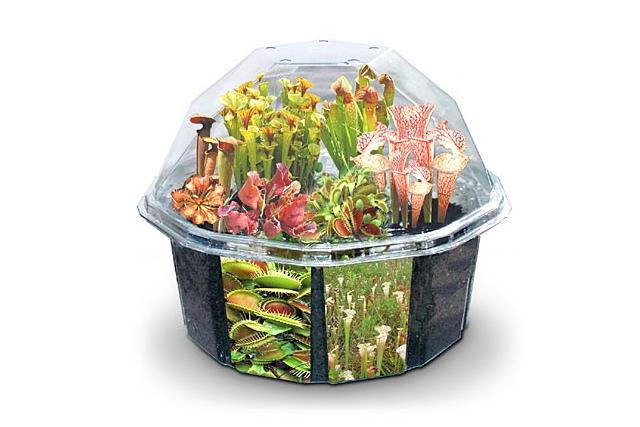 Desktop Carnivorous Plant Set from Think Geek