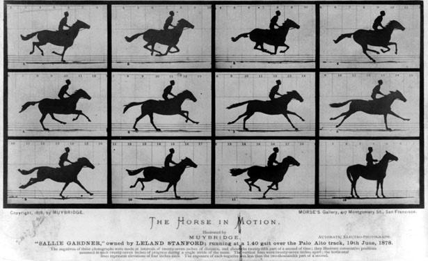 The Horse in Motion