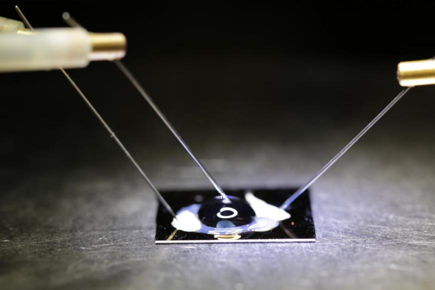 The biosensor chip-electronically detects DNA SNPs