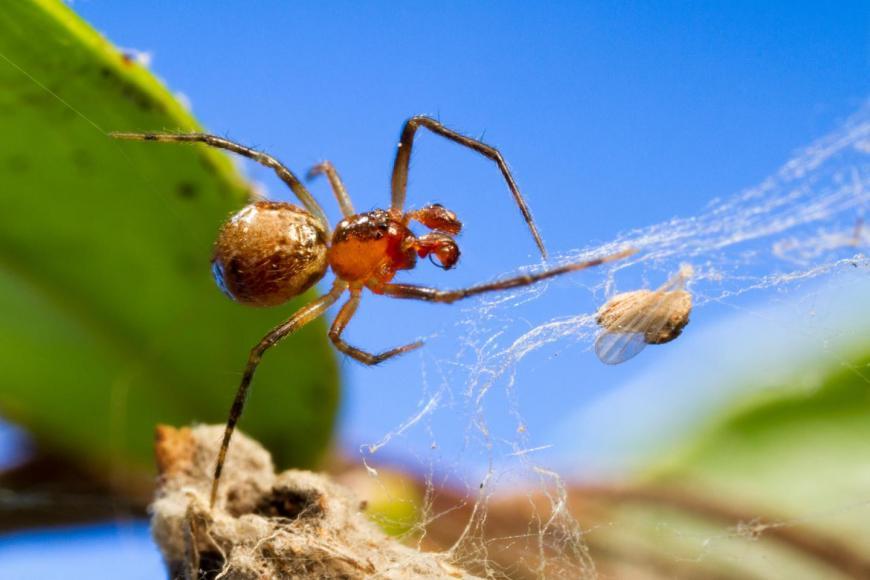 spider personalities