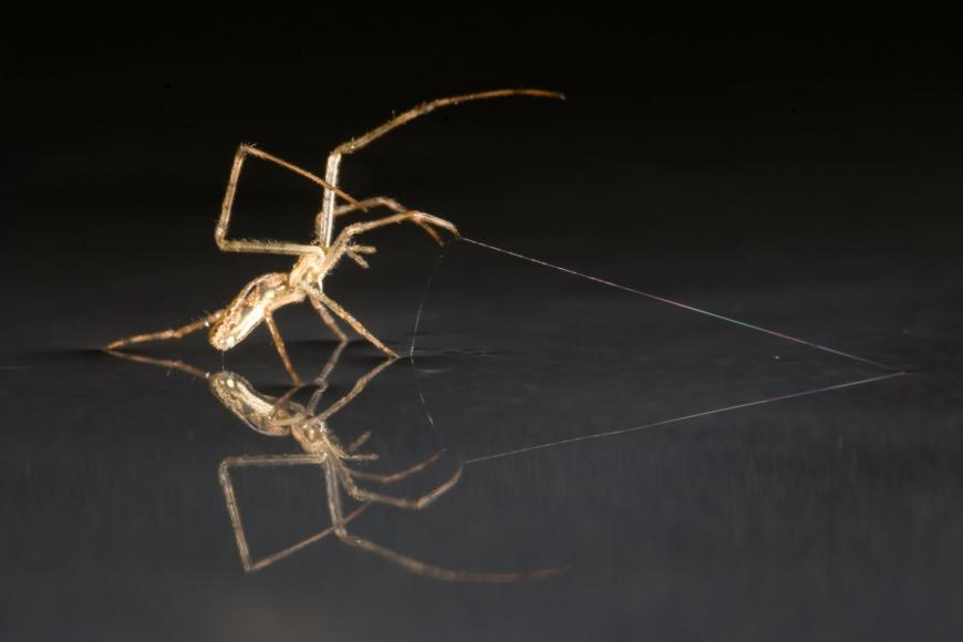 """Spider """"sailing"""" over a surface of water."""