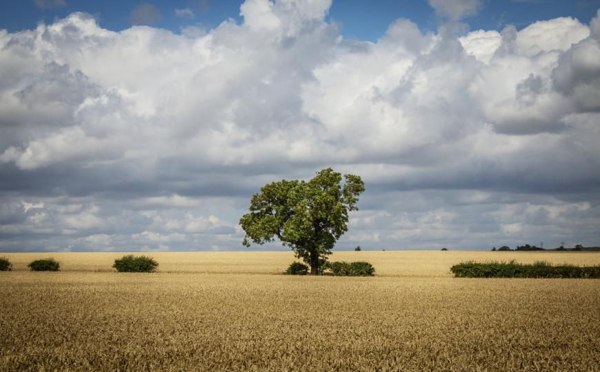 Tree in a field, clouds
