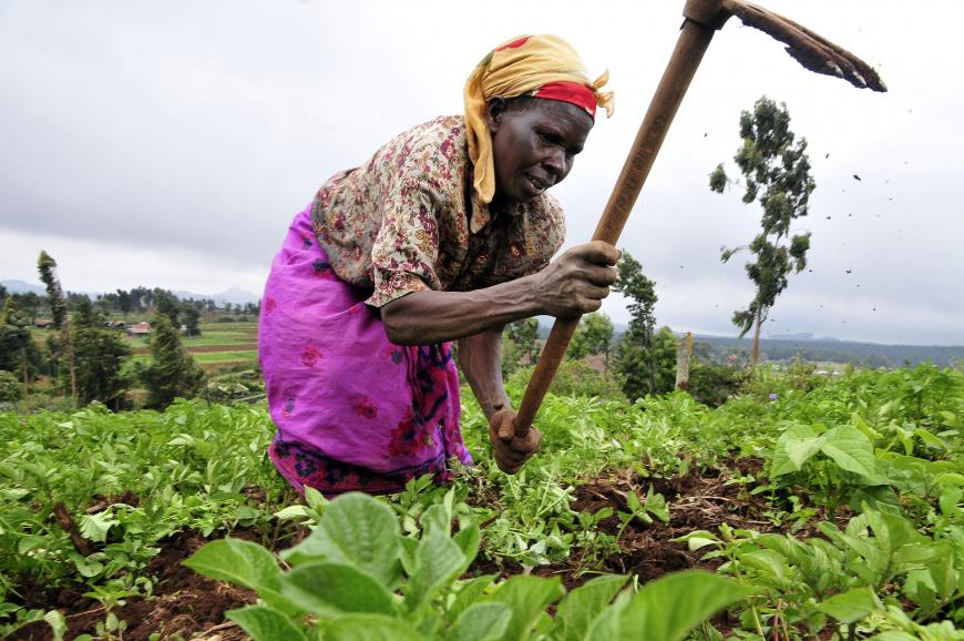 A Kenyan woman farmer at work in the Mount Kenya region.