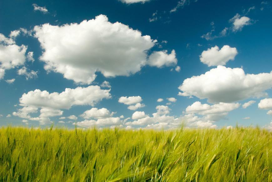 Clouds blue sky, field