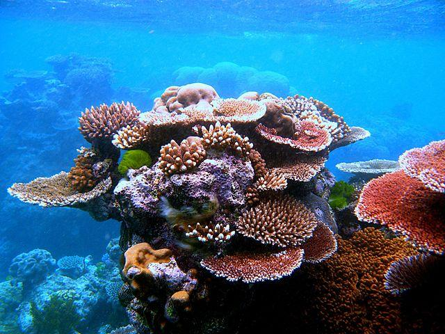 A variety of corals form an outcrop on Flynn Reef, part of the Great Barrier Reef near Cairns, Queensland, Australia.
