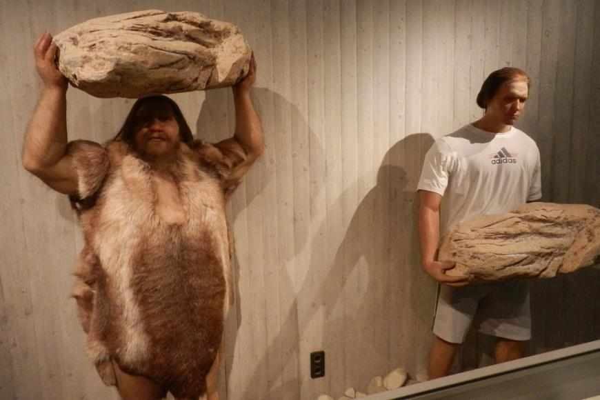 Neanderthal man and human in a museum display case