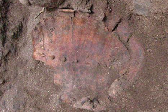 A tortoise shell excavated at the grave site