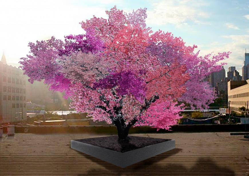 "A ""Tree of 40"" Fruits in full blossom with each branch a different hue of pink."