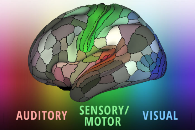 regions of the brain, divided by auditory, sensory/motor, and visual