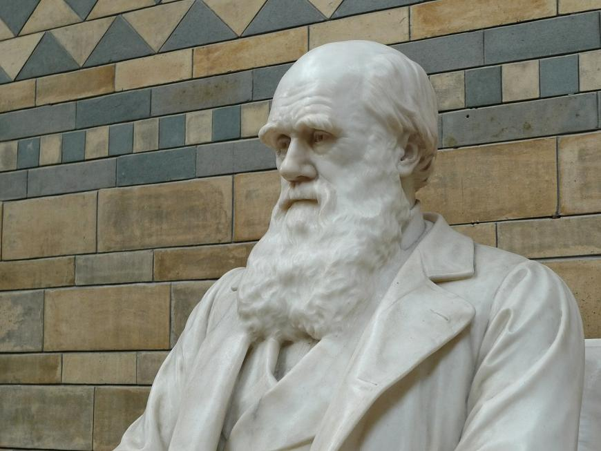 A white bust sculpture of Charles Darwin