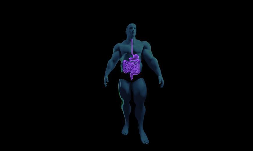 Digestive System CREDIT: sbtlneet / Pixabay