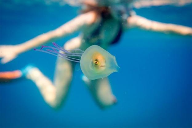 Fish inside jellyfish
