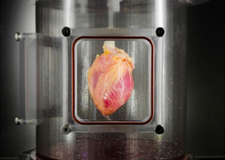 Heart grown from stem cells and a decellularized donor organ