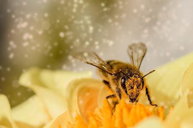 Hover Fly. CREDIT: Myriams-fotos / Pixabay (CC0)