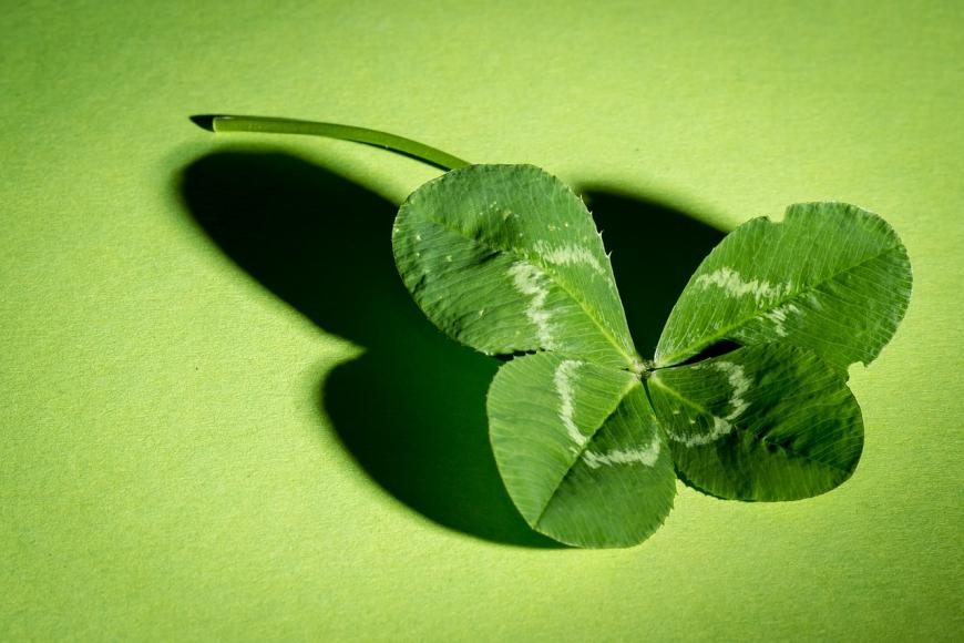 What Are Your Chances of Finding a Four Leaf Clover The Science
