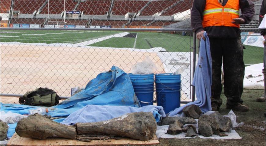 Giant bone in a football stadium