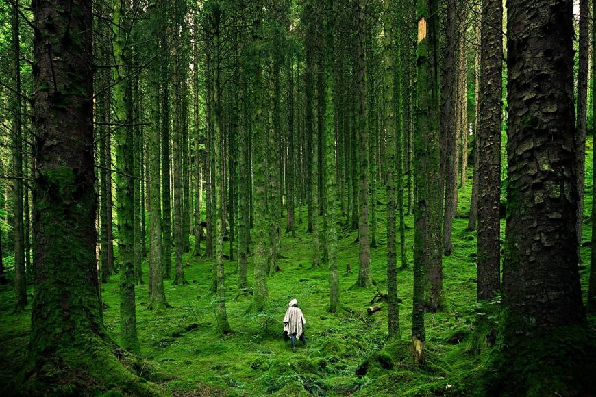 green moss-covered forest