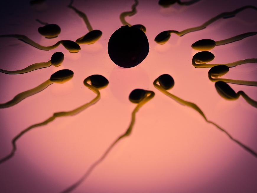 Model of sperm cells fertilizing an egg