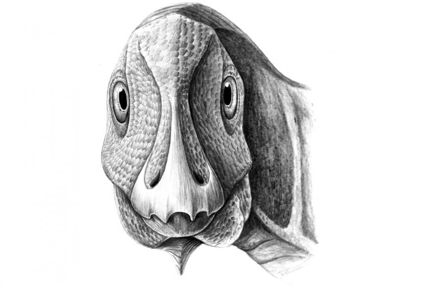 Telmatosaurus, duckbilled dinosaur