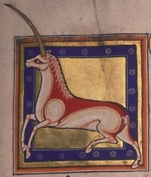 Monoceros or unicorn