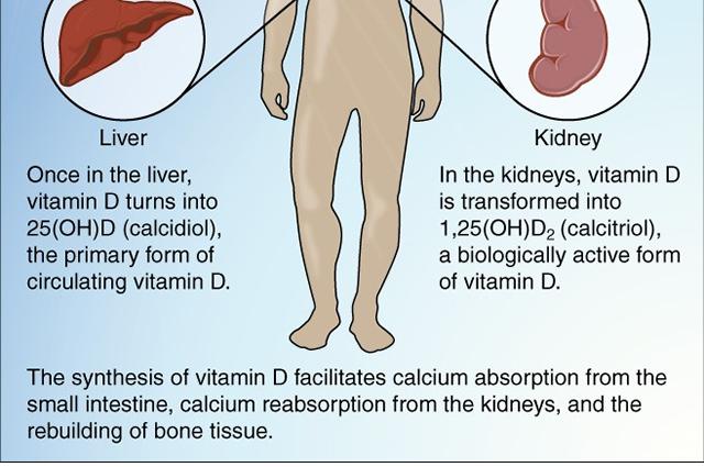 Vitamin D diagram