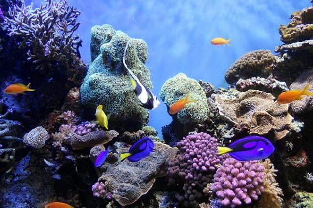 Coral reefs need fish urine to thrive