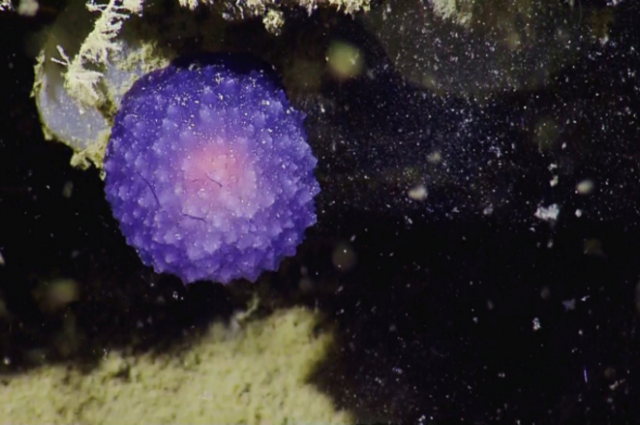 Mysterious 'Purple Orb' Spotted Off California Coast