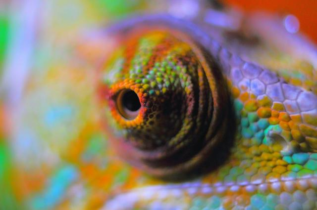 12 of the coolest eyes in the animal kingdom the science for What fish has eyelids