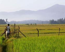 Farm in India