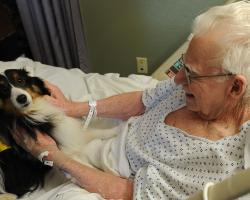 Langley, the therapy dog, sits in the lab of an elderly hospital patient.