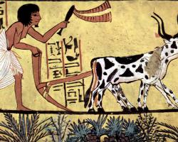 Egyptian art depicting a man and oxen plowing a field c. 1200 BC
