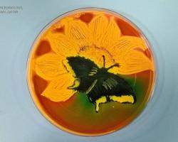 Agart Art. Butterfly in a petri dish
