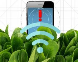 nanobionic spinach plant