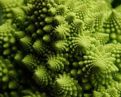 Close-up of a Romanesco broccoli
