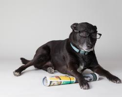Dog with newspaper, wearing reading glasses
