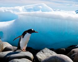 Penguin, ice