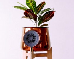 Clairy, the air-filtering plant