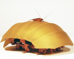 Cramroach, the robotic cockroach
