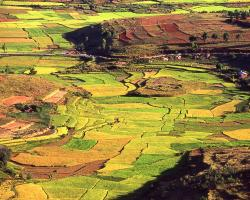 Rice paddies in the Madagascar countryside