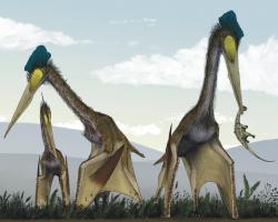Quetzalcoatlus northropi pterosaurs