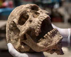 Philistine skull excavated from the Philistine City of Ashkelon